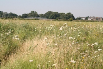 Grassland on silt lagoons Copyright: Peter Harvey
