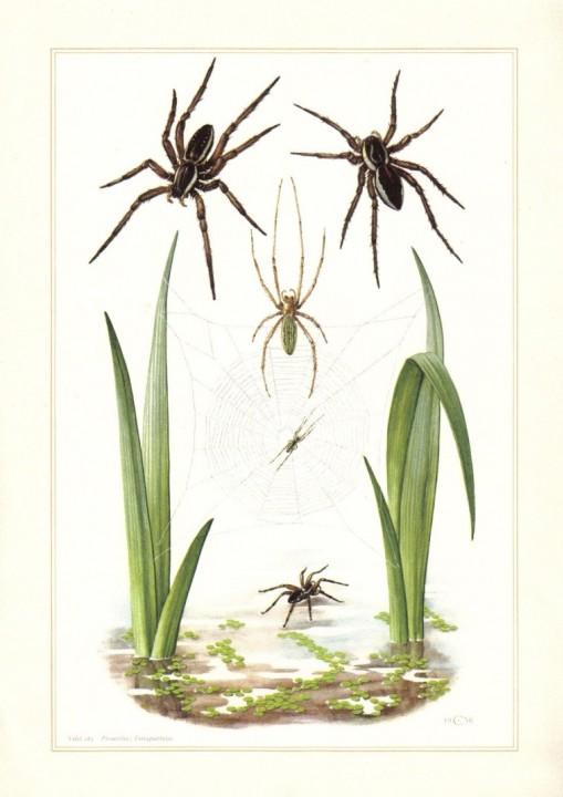 Spider print 2 Copyright: