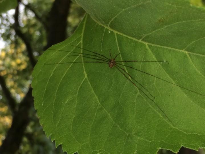 Strange spider Copyright: Austin Largan