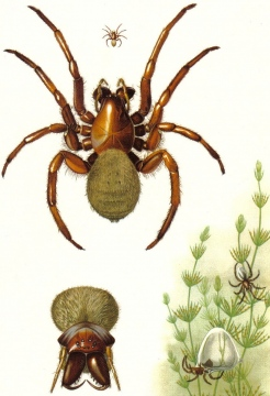Spider print 3 Copyright: