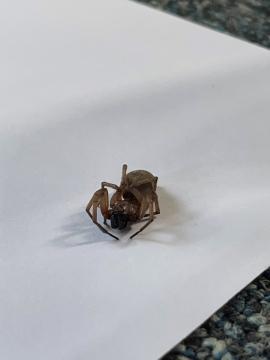 Cabin Spider 3 Copyright: Antony Brown