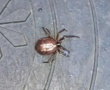 Hoo Spiders 1 Copyright: Christian Sloan-Murphy