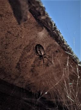 spider Dunfermline Copyright: Jonathan Milburn