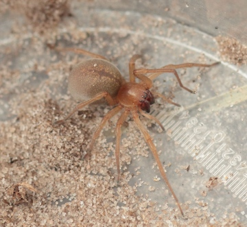Roydon spider 1 Copyright: Andrew Bloomfield
