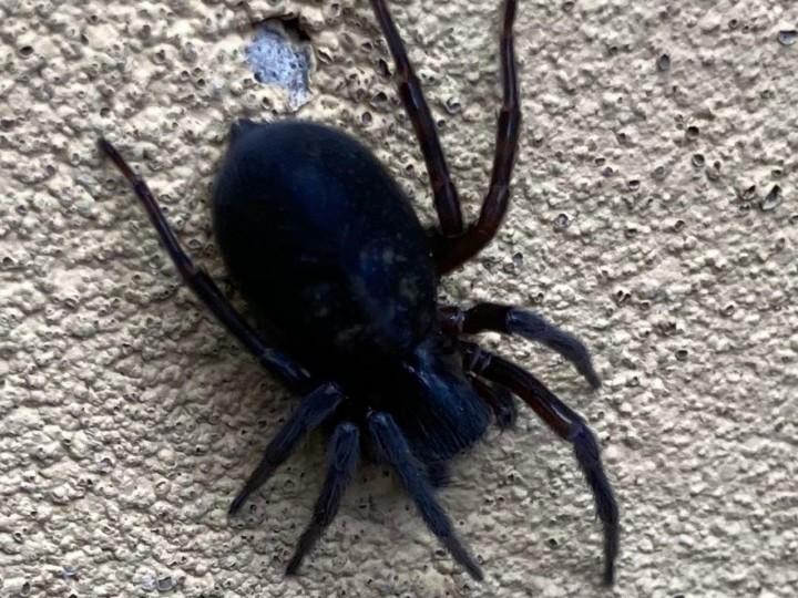 Unknown Spider Newcastle Copyright: