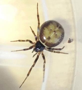 Mystery Spider In My Garden Copyright: Daniel Cunnah