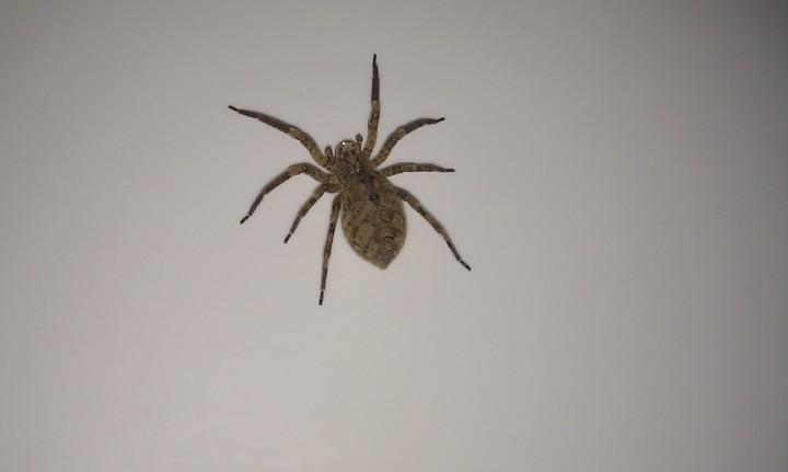 Spider BS3 Copyright: Kelly Knight