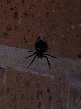 Photo spider new Copyright: Joanne Gibson