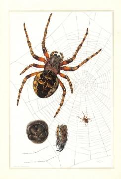 Spider print 1 Copyright: