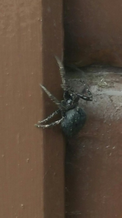 Spider 2 Copyright: Robert Thompson