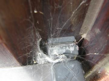 Segestria florentina web in door hinge Copyright: Alison Barker