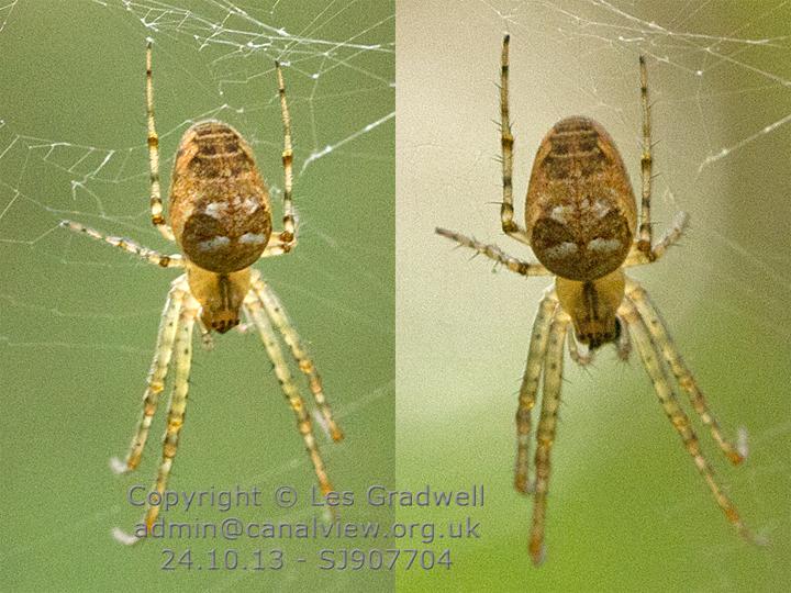 Identification-6 Copyright: Les Gradwell