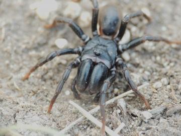 My spider pics ! no2. Copyright: Angie Craig