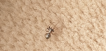 Spider in Somerset Copyright: Guy Lee-Potter