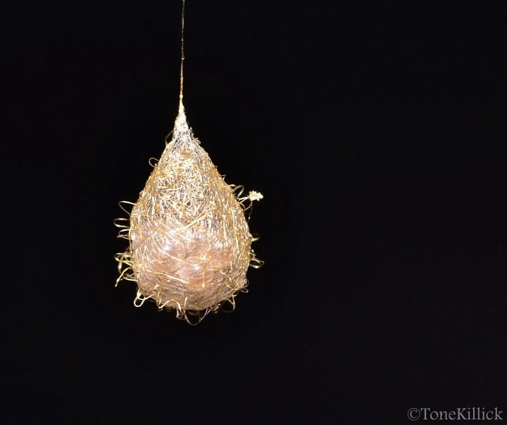 Egg sac Ero aphana Copyright: Tone Killick